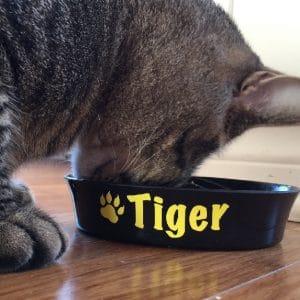 Tiger le chat mange dans son plat lettré
